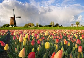 5-Star Tulips Cruise