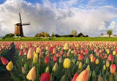 Holland & its Tulips Cruise