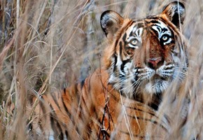 Ranthambore & India's Golden Triangle
