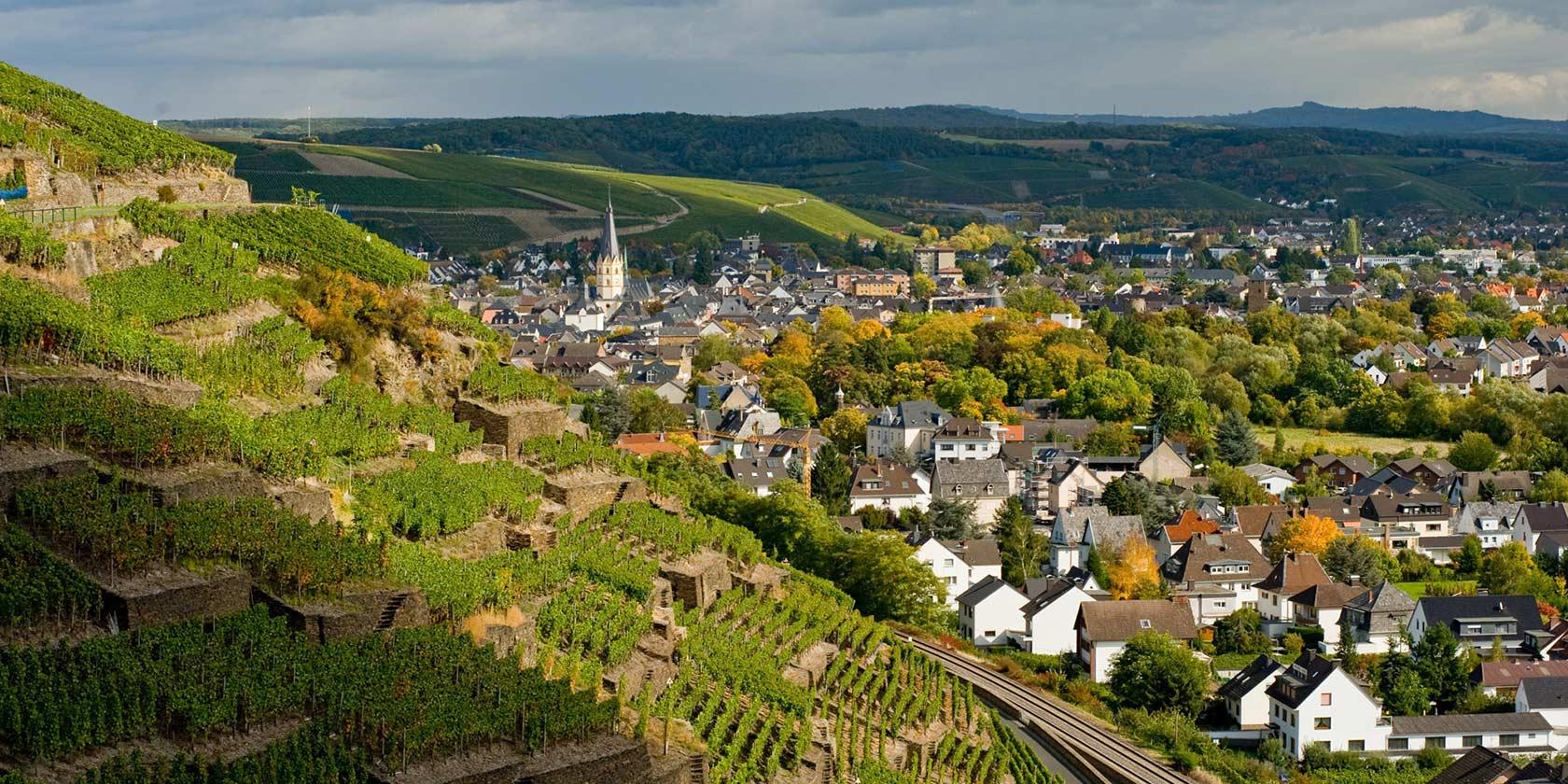 Ahr | Wine Region Guide