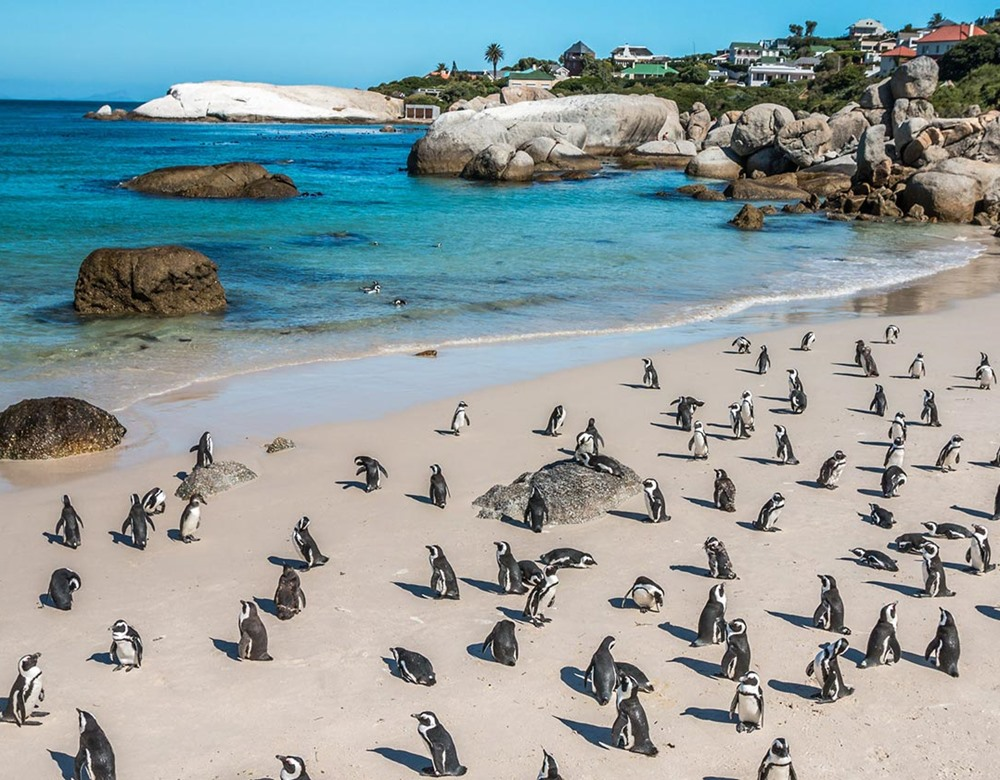 Boulder Bay Penguins, South Africa