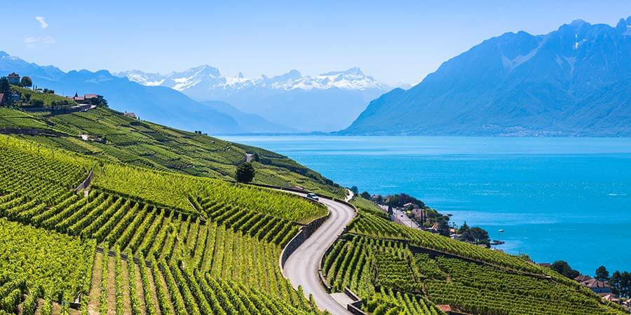 Vineyards in Lavaux region
