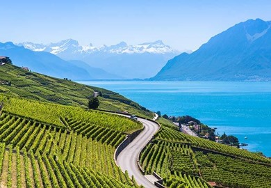 Vineyards In Lavaux
